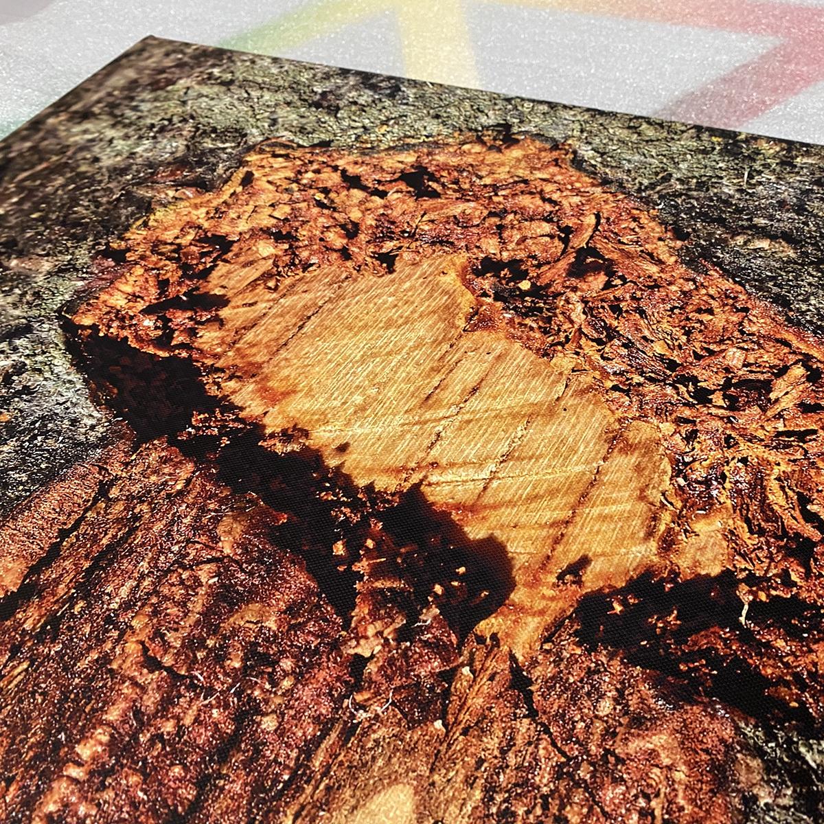 Baumstrukturen von Ute Haese und Torsten Prawitt